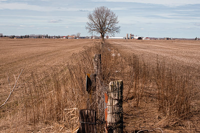 Image of a fenceline in the country, early spring, no snow but the grass is brown and the tree is bare of leaves